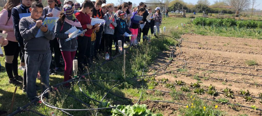 L'alumnat de 1r d'ESO participa en la setmana de l'Horta a l'Escola